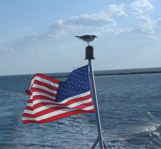 Seagull on Flag